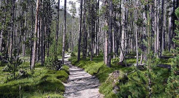Parque Nacional da Suíça, Grisões, Suíça. Autore e Copyright Marco Ramerini