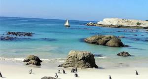 Pinguins nos arredores da Cidade do Cabo: Boulders Beach