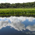 Marimbus Pantanal, Bahia, Brasil. Author and Copyright Marco Ramerini