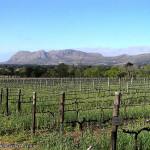 Vinhas de Groot Constantia, Cidade do Cabo, África do Sul. Author and Copyright Marco Ramerini