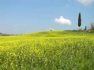 Barberino Val d'Elsa, Chianti, Toscana, Itália. Autore e Copyright Marco Ramerini