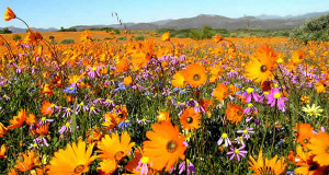 Namaqualand, África do Sul. Author and Copyright Marco Ramerini