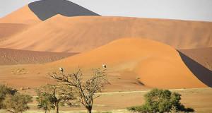 Deserto do Namibe, Namib-Naukluft, Namíbia. Autor e Copyright Marco Ramerini..