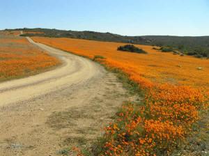 Namaqualand, África do Sul. Author and Copyright Marco Ramerini