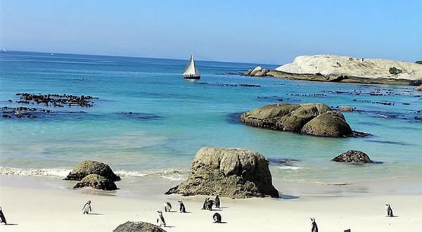 Pinguins no Foxy Beach, Boulders Beach, Cidade do Cabo, África do Sul.. Autore e Copyright Marco Ramerini