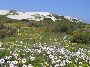 West Coast National Park, África do Sul. Autor e Copyright Marco Ramerini.