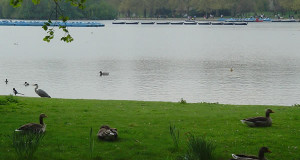 O Serpentine, Hyde Park, Londres, Reino Unido. Autor e Copyright Niccolò di Lalla