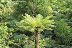 Vegetação, Doubtful Sound, Nova Zelândia. Autor e Copyright Marco Ramerini