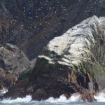 Aves marinhas, Cabo Horn, Chile. Autor e Copyright Marco Ramerini