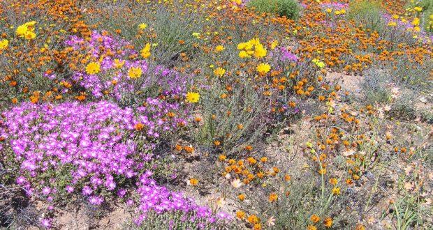Namaqualand, África do Sul. Autor e Copyright Marco Ramerini