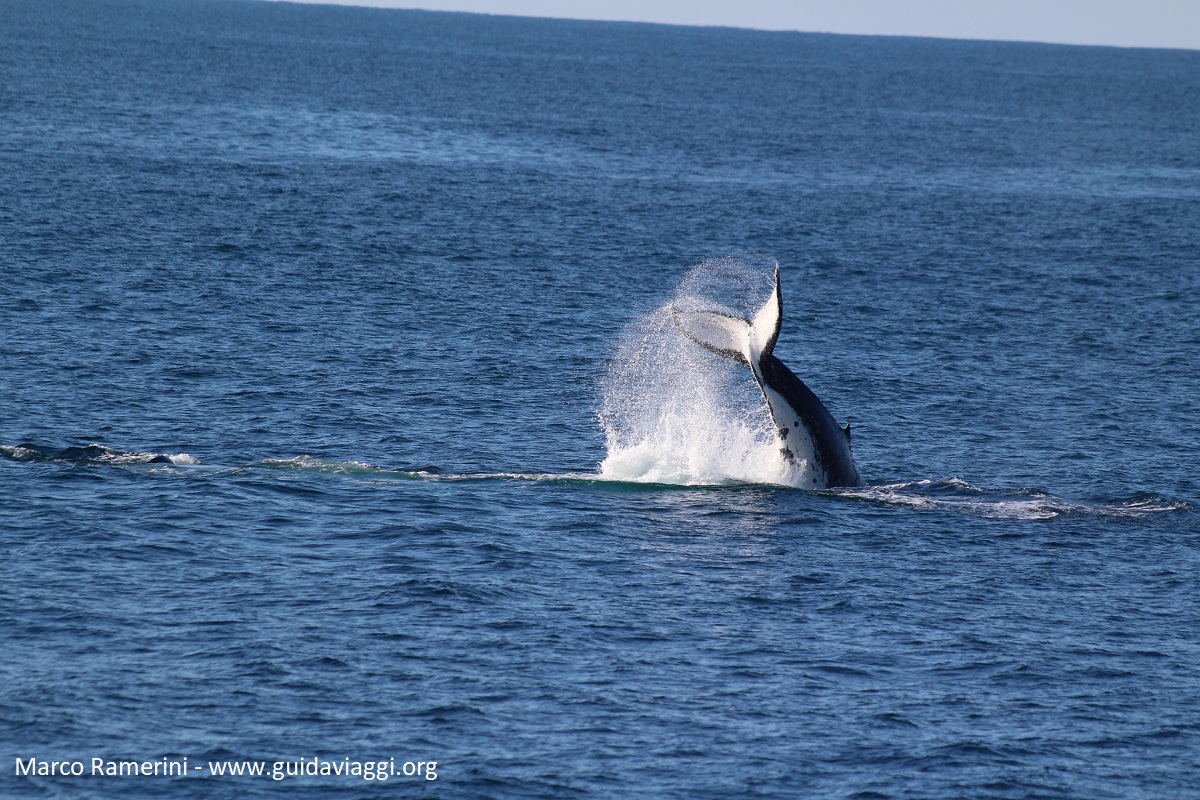 Baleia, Doubtful Sound, Nova Zelândia. Autor e Copyright Marco Ramerini