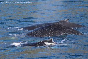 Baleias, Doubtful Sound, Nova Zelândia. Autor e Copyright Marco Ramerini