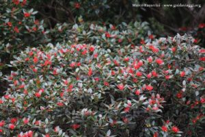 Flores, Doubtful Sound, Nova Zelândia. Autor e Copyright Marco Ramerini