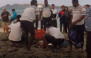 Preparação do Lovo, Fiji. Autor e Copyright Marco Ramerini