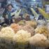 Singi (Shingi) Market, Incheon, Coreia do Sul. Autor e Copyright Marco Ramerini.,