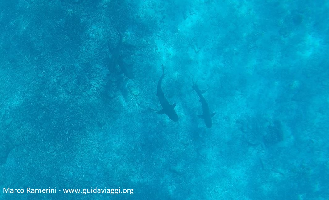 Snorkeling com tubarões, Kuata, Ilhas Yasawa, Fiji. Autor e Copyright Marco Ramerini.