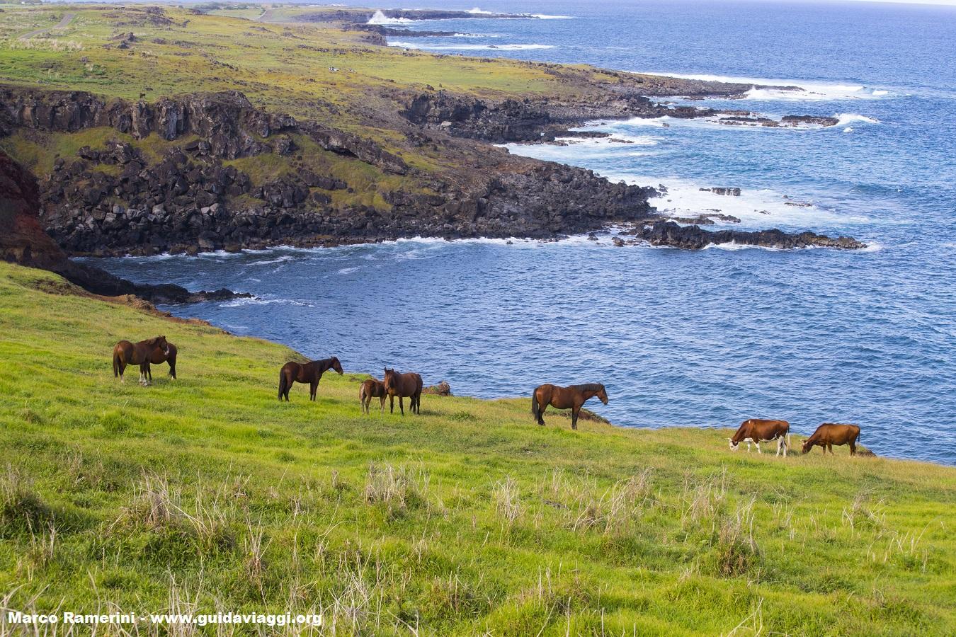Cavalos, Ilha de Páscoa, Chile. Autor e Copyright Marco Ramerini.