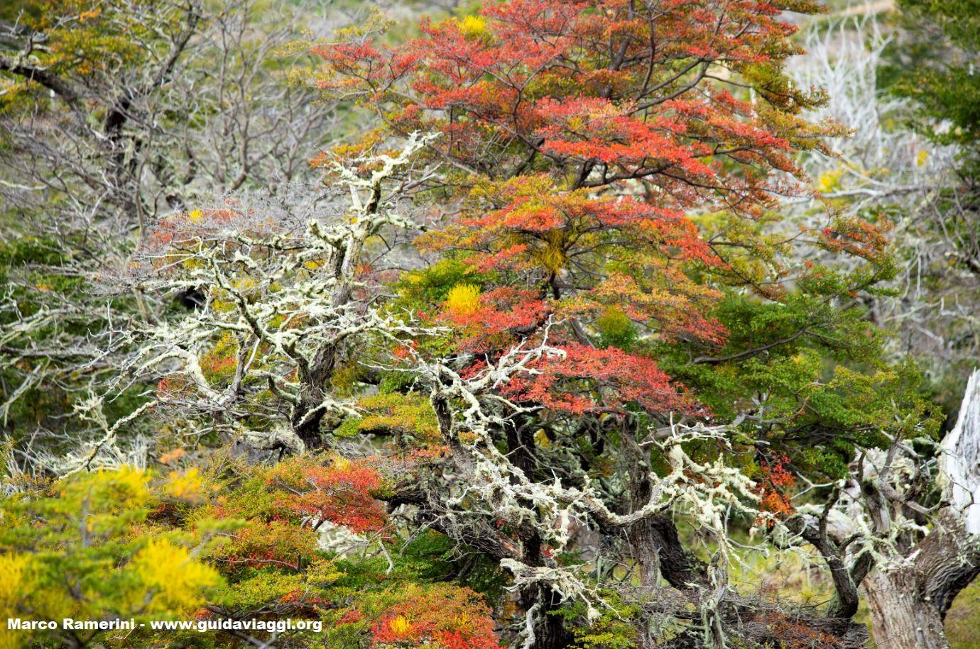 Serrano, Parque Nacional Torres del Paine, Chile Autor e Copyright Marco Ramerini.