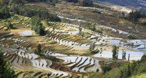 Campos de arroz, Yuanyang, Yunnan, China. Autor e Copyright Marco Ramerini