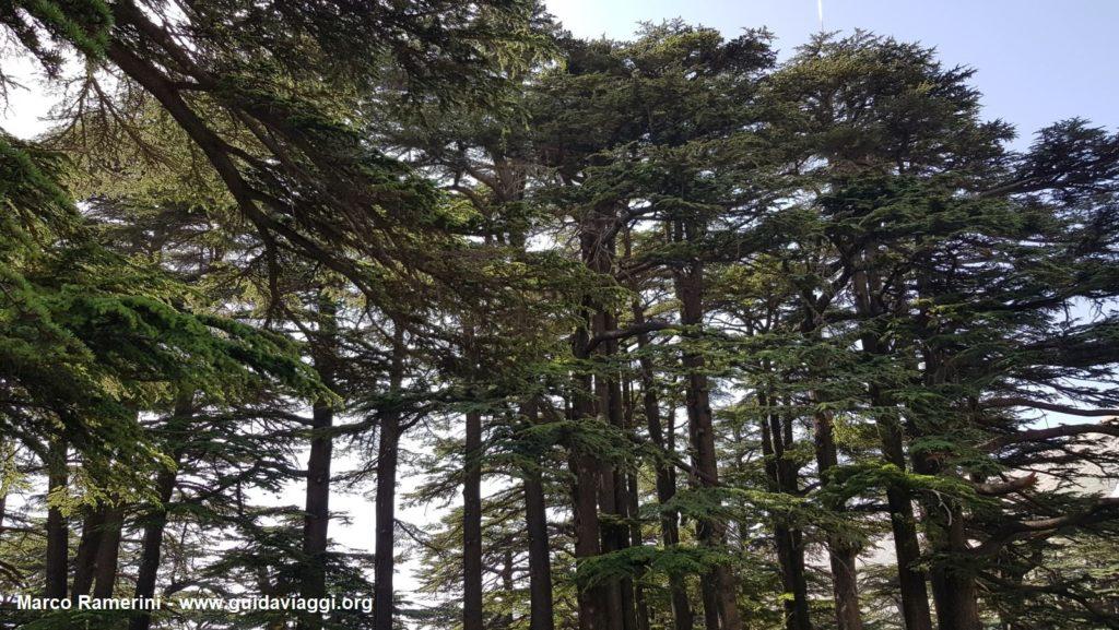 A floresta dos cedros de Deus, Líbano. Autor e Copyright Marco Ramerini