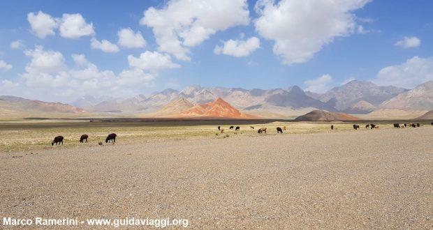 Montanhas da Ásia Central. Animais pastando após a fronteira entre o Quirguistão e a China. Autor e Copyright Marco Ramerini