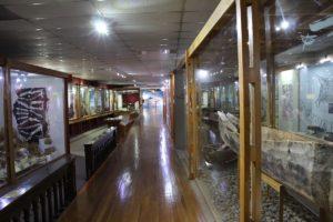 Museu Maggiorino Borgatello, Punta Arenas, Chile. Autor e Copyright Marco Ramerini