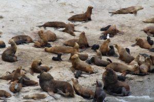 Punta Pirámide, Península Valdés, Argentina. Autor e Copyright Marco Ramerini